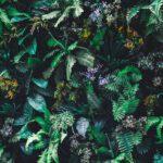 fototapet-tropical-rainforest