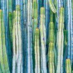 Fototapet_3D_Modern_Cactus
